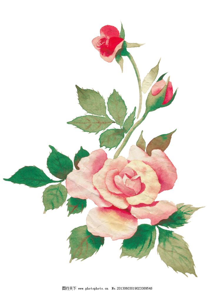 手绘粉色玫瑰花图片