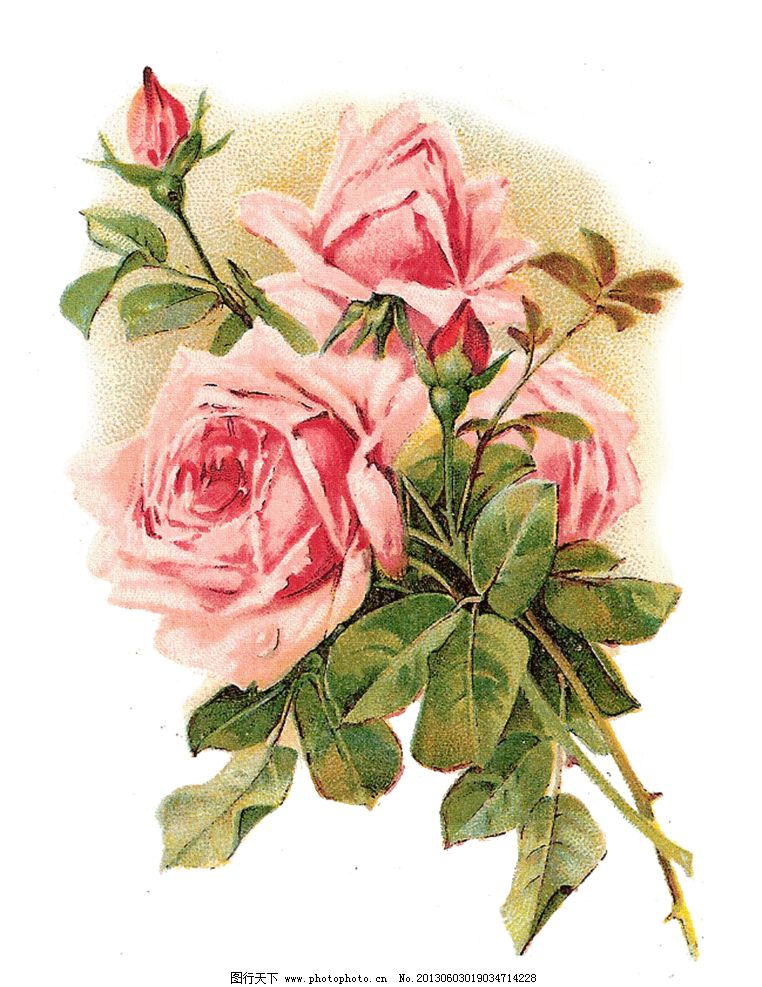 复古粉色玫瑰花 手绘玫瑰花设计素材 手绘玫瑰花模板下载 手 手绘玫瑰