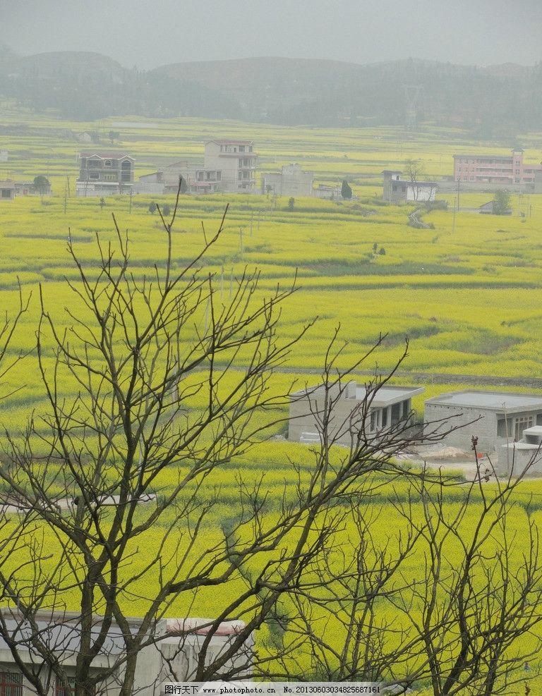 春天的景色 春天 农村 村寨 油菜花 风景 自然风景 自然景观 摄影 72d