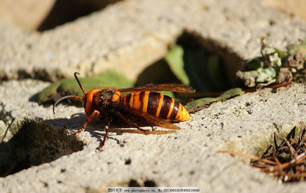 蜂子 蜜蜂 动物世界 昆虫 生物世界 摄影