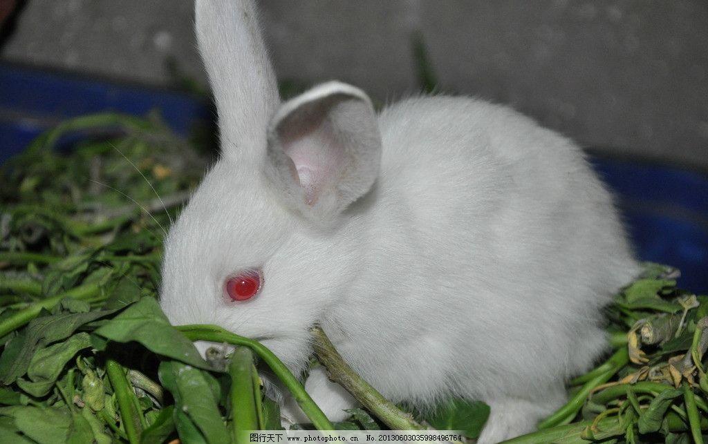 小白兔图片