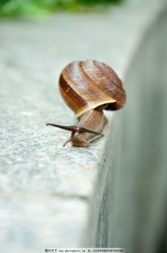蜗牛 摄影 爬行 动物 昆虫 生物世界 240dpi jpg