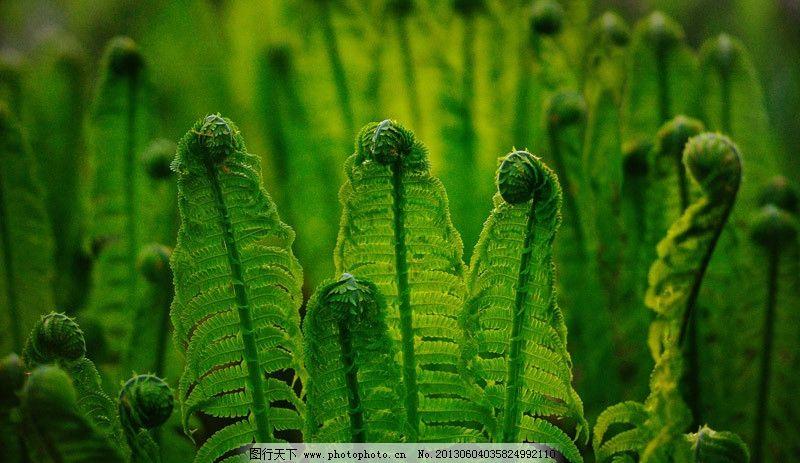 原始森林 叶子 绿色 排列 微距 树木树叶 生物世界 摄影 96dpi jpg