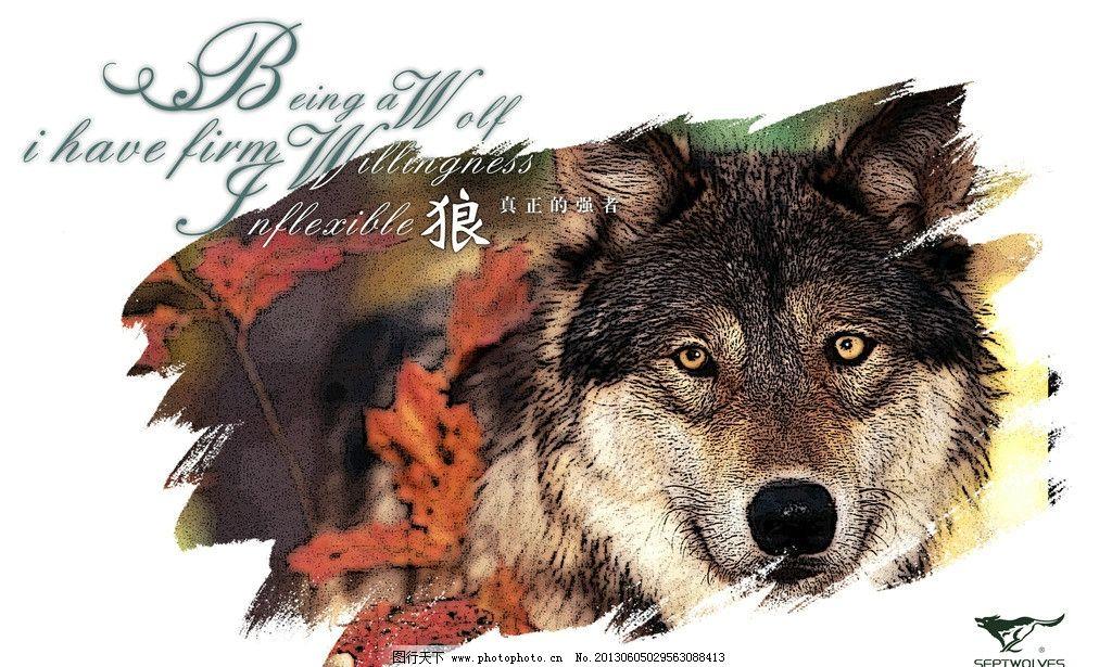 七匹狼 狼头海报 海报 沙漠狼 英文 淘宝 狼头 广告设计 设计 72dpi