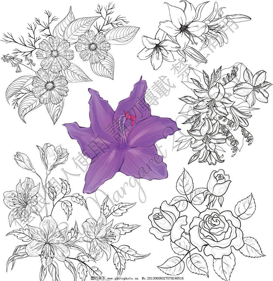 白描勾线花朵图片