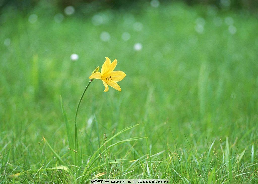 拍摄鲜花 自然拍摄 数码拍摄 绿草鲜花 电脑屏保 手机墙纸 摄影