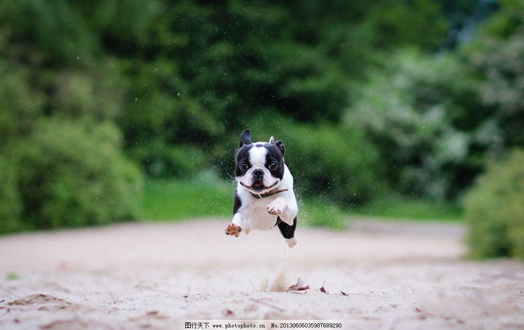 奔跑中的小狗图片