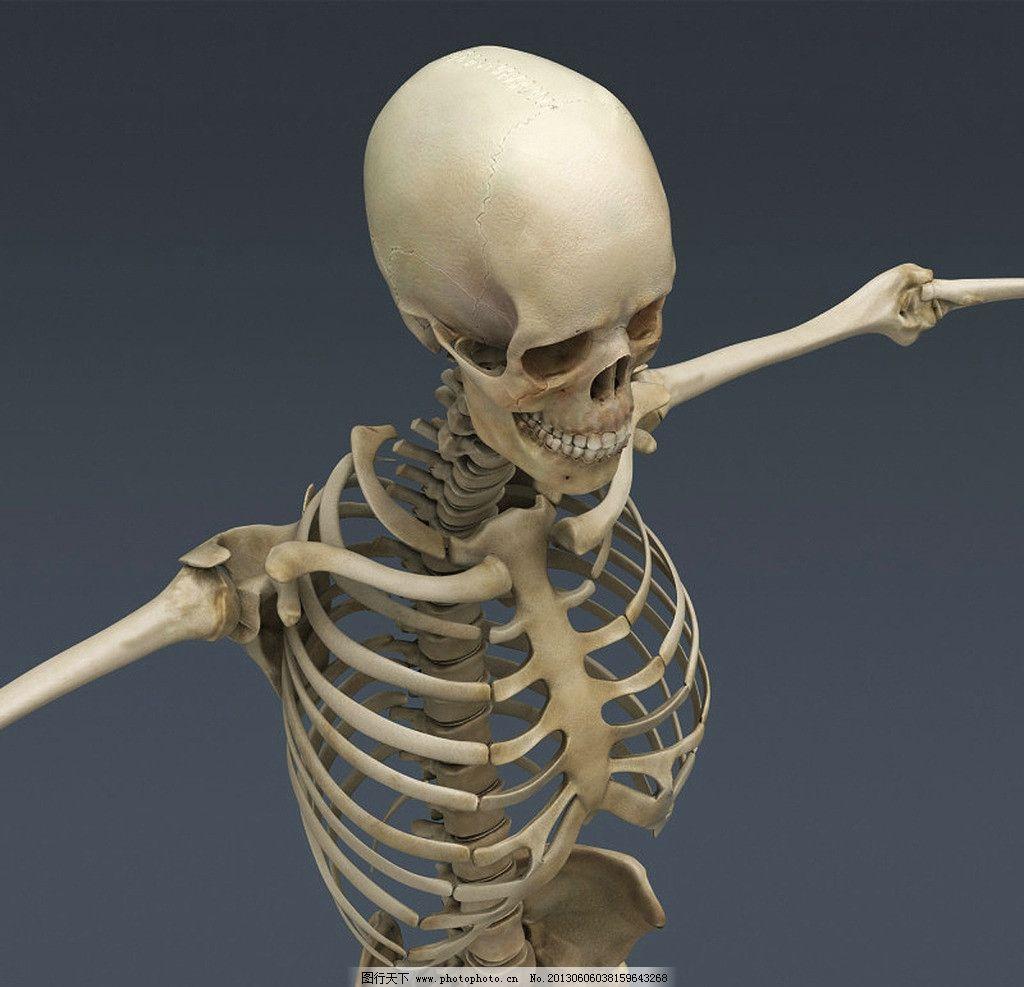人体骨骼素材 头骨 骨骼
