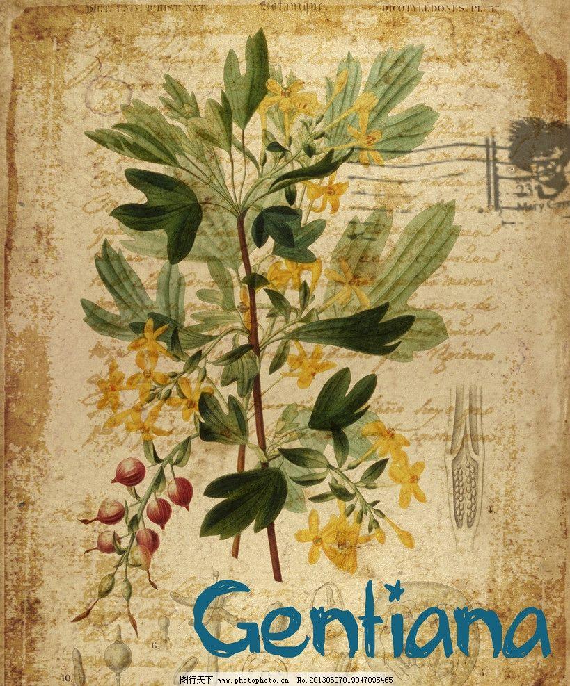 欧式复古水彩花卉 欧式 复古 水彩 花卉 做旧 信签 黄色龙胆花 装饰画