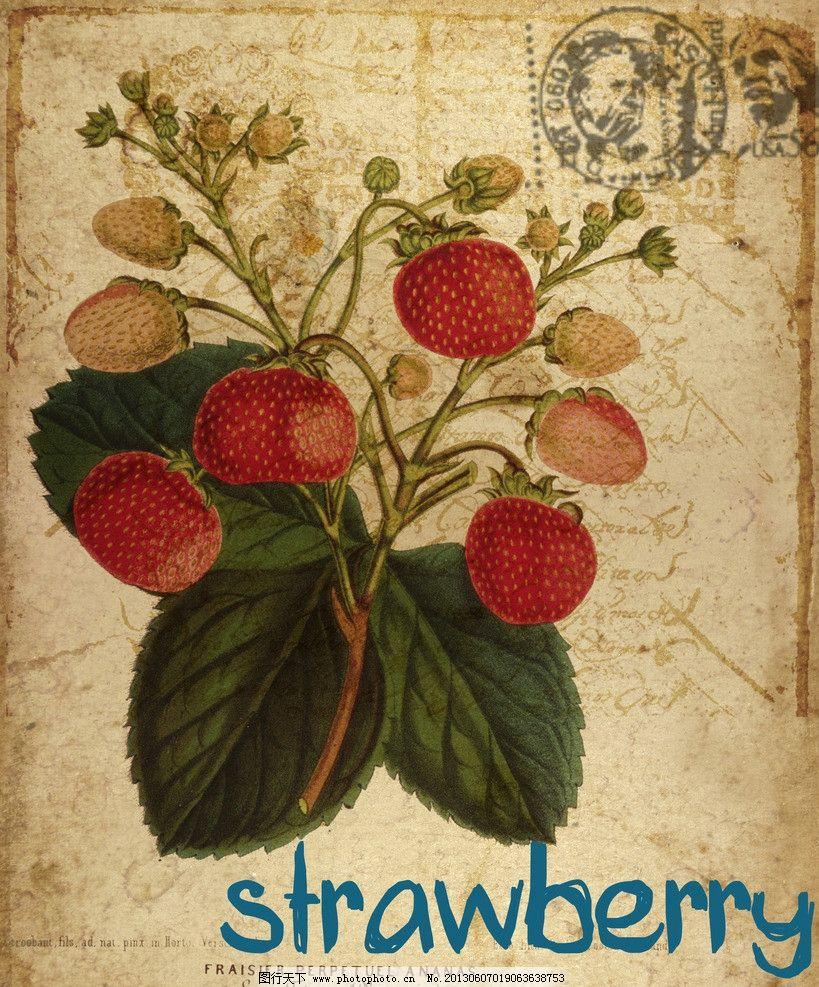 欧式复古水彩花卉 草莓花 欧式 复古 水彩 花卉 做旧 信签 手绘 装饰图片