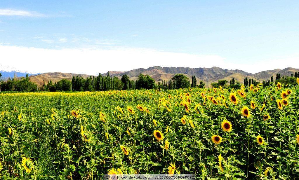 自然风景 自然景观 绿色 绿叶 花朵 摄影 300dpi jpg