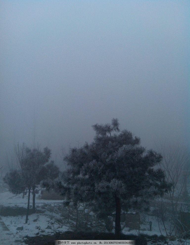 雪天的雾霾 雾霾 雪天 松树 冬天 下雪 自然风景 自然景观 摄影 72dpi