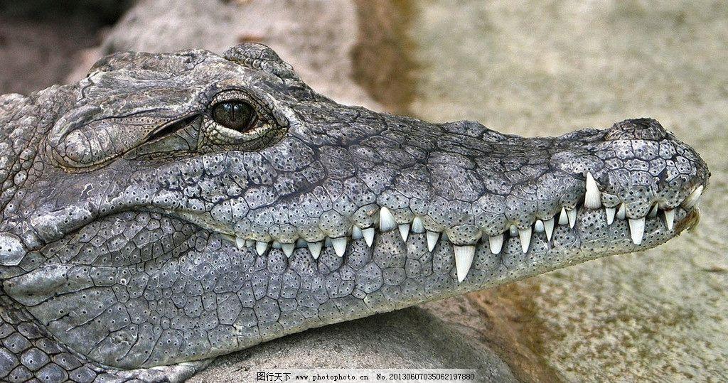 折纸大全 图解鳄鱼