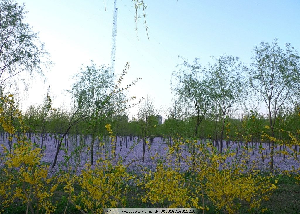 春天风景 花海 美丽 兰花 二月兰 迎春花 花草 生物世界 摄影