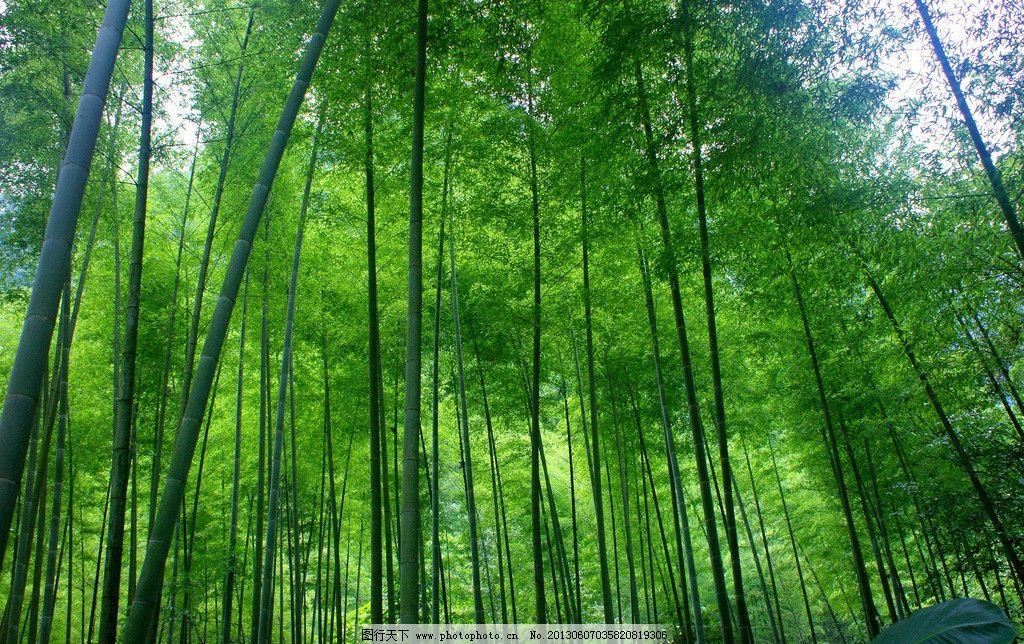 竹林 绿色森林 大自然 树木树叶 生物世界 摄影 72dpi jpg