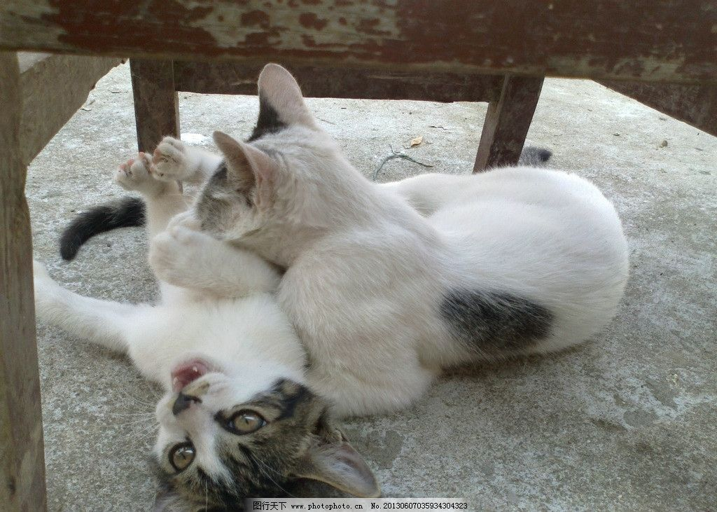 动物猫咪图片