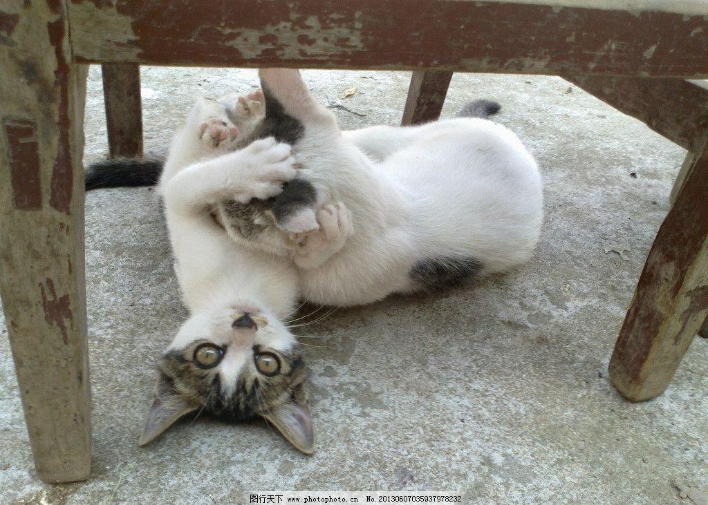 打架的猫 黑白猫 小猫咪 大猫咪 可爱的猫咪 猫的眼睛 猫头 猫爪 家禽