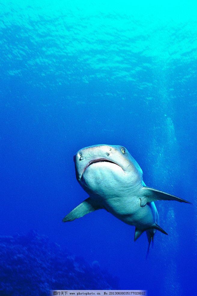 鲨鱼 海底动物 海底生物 海水 海底 海洋生物 生物世界 摄影 350dpi