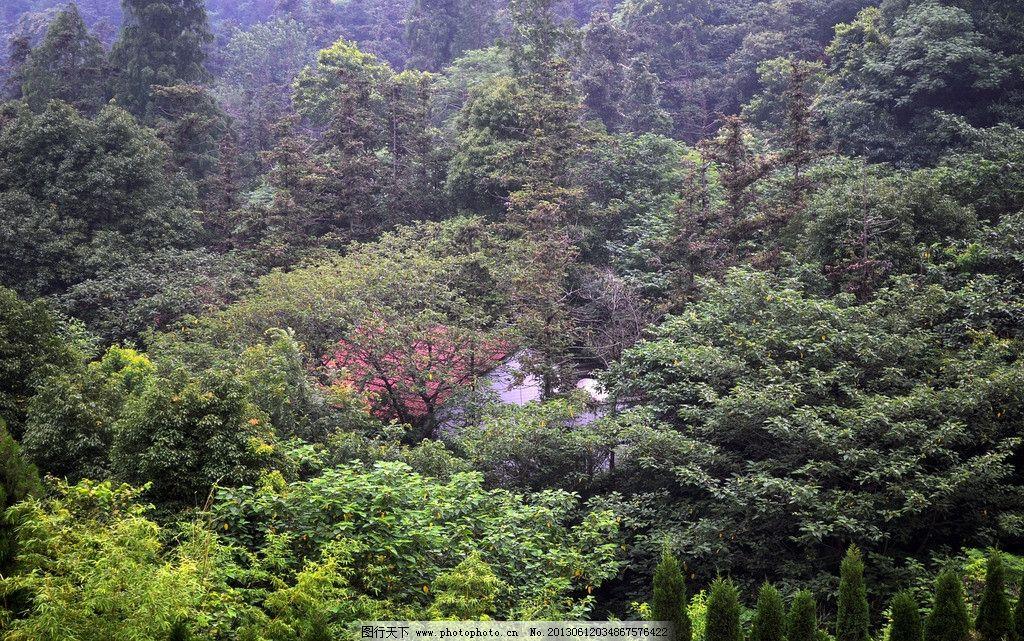 襄阳岘山风景区 绿色生态山林 岘山森林公园 红屋顶房子 白墙红瓦