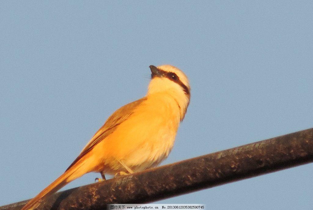 壁纸 动物 鸟 鸟类 雀 1024_687