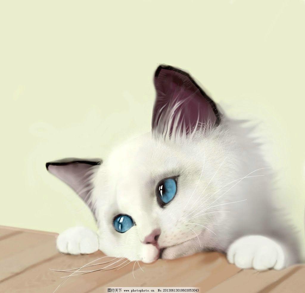 猫咪 动物 手绘 动漫 卡通