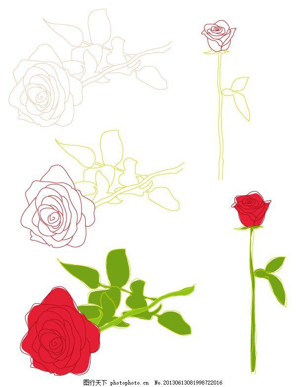 玫瑰花 手绘 过程 卡通 白色