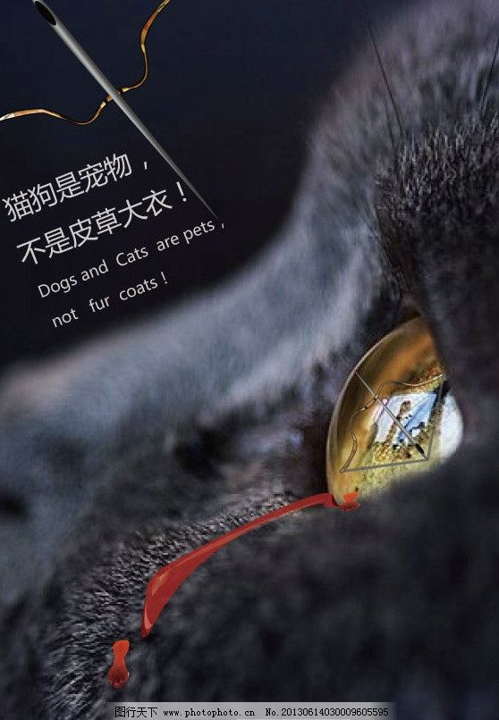 反皮草海报 海报 猫 狗 宠物 皮草大衣 毛 保护动物 环保 海报设计 广