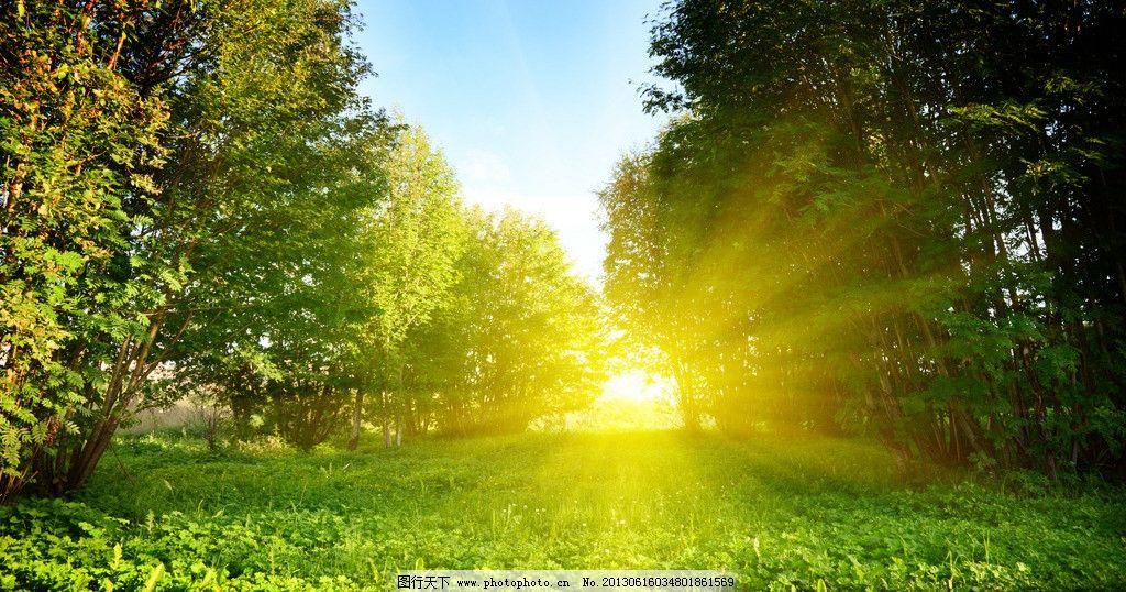 阳光 树林 草地 草原 森林 绿树 大树 丛林 自然 美景 风景 景观 户外