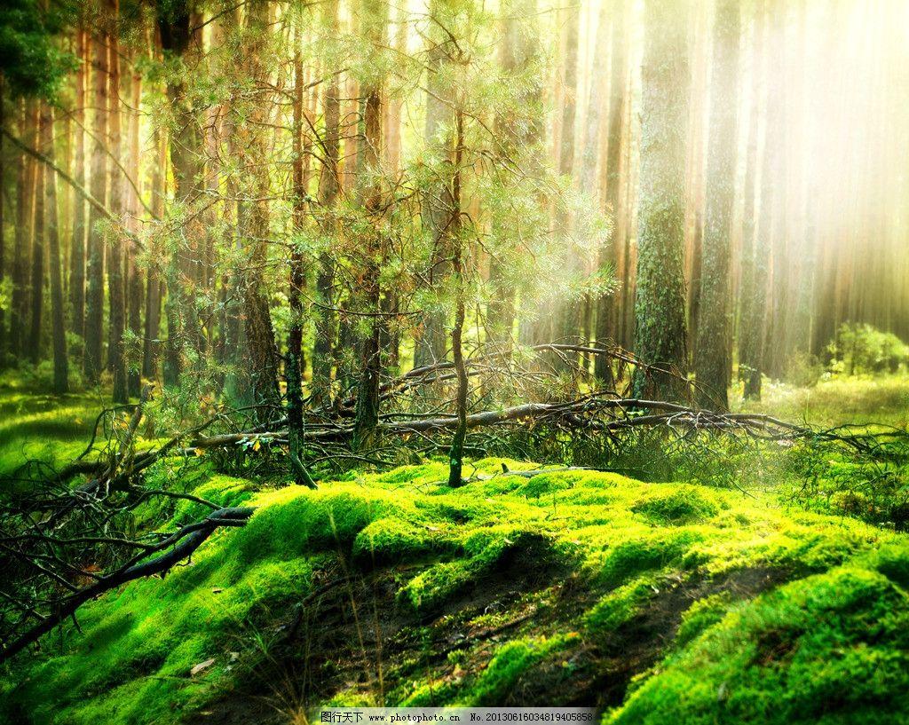 深林 深林景象 深林树木 森林 树木 桌面壁纸 壁纸 自然风景 自然景观