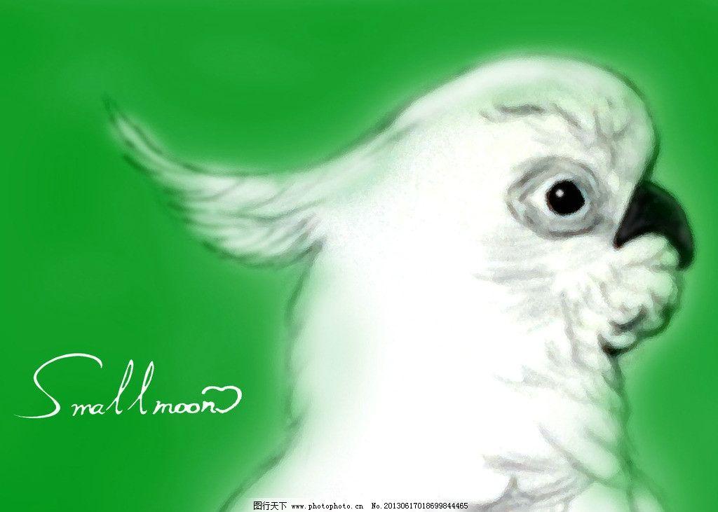 白鹦鹉 手绘     动漫 绿色底 素描 其他 动漫动画 设计 4dpi jpg