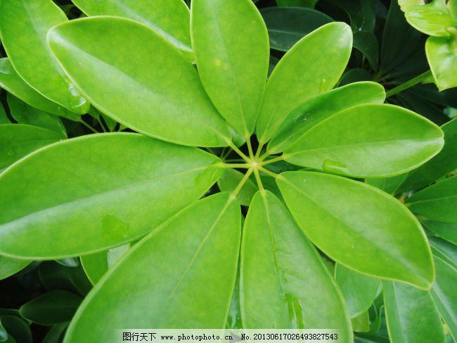 夏季清新绿色叶子图片