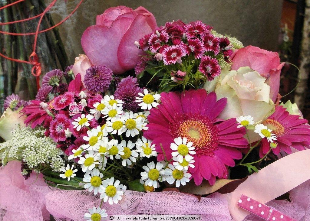 鲜花 花朵 花草 花卉 生物世界 自然风景 摄影 摄影图库