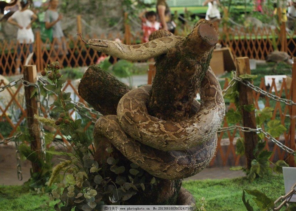 眼镜蛇 公园 蛇 毒蛇 动物 动物园 野生动物 生物世界 摄影 314dpi
