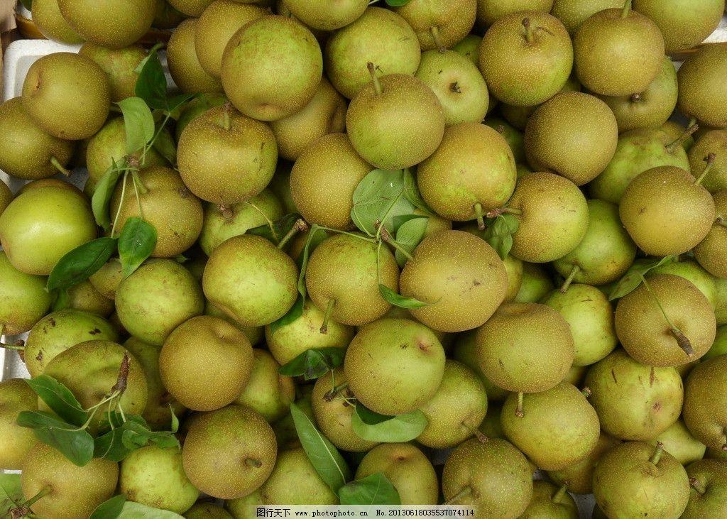 糖梨 梨子 沙梨 水果 果实 生物世界 摄影 96dpi jpg