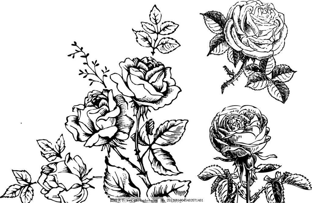 素描玫瑰花图片