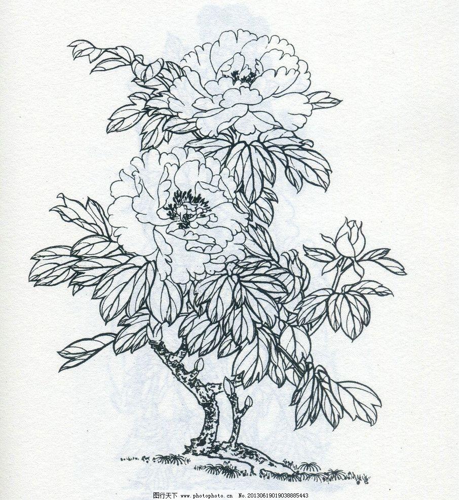 牡丹 花朵 线描图片