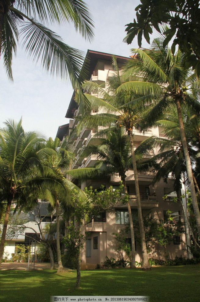 植物园 泰国普吉岛 pp岛 海滩 沙滩 大树 椰树 蓝天 白云 旅游 度假