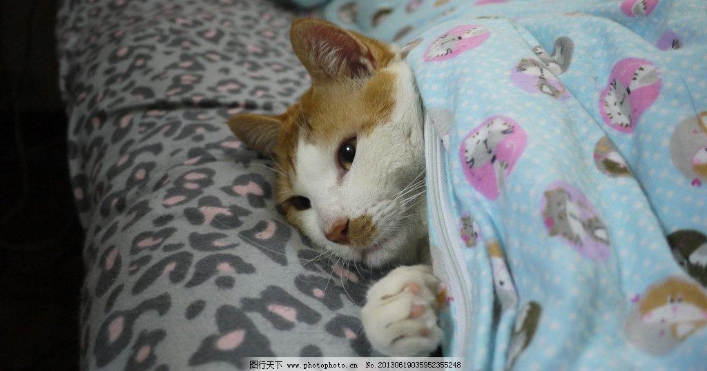 猫咪 盖被子图片