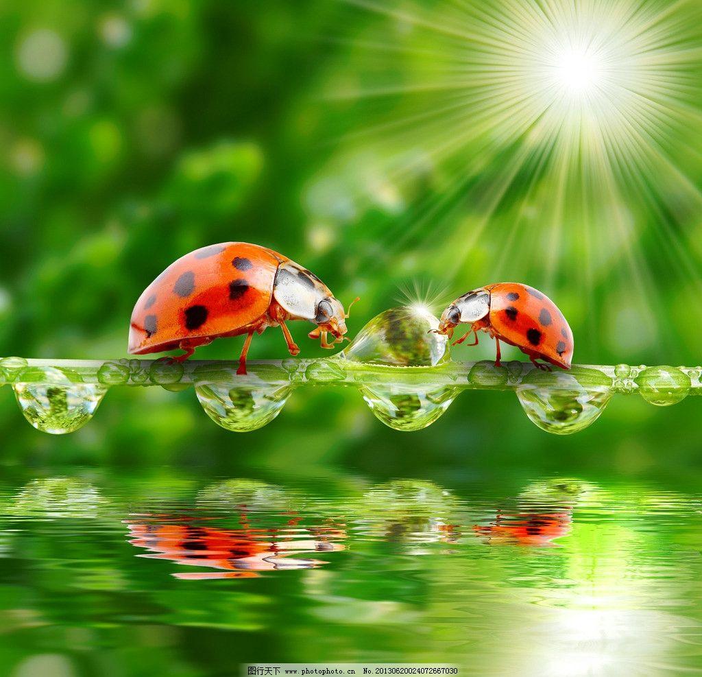 水珠 阳光 光线 晶莹剔透 倒影 水泡 树枝 春天 风景 墙纸 背景 昆虫
