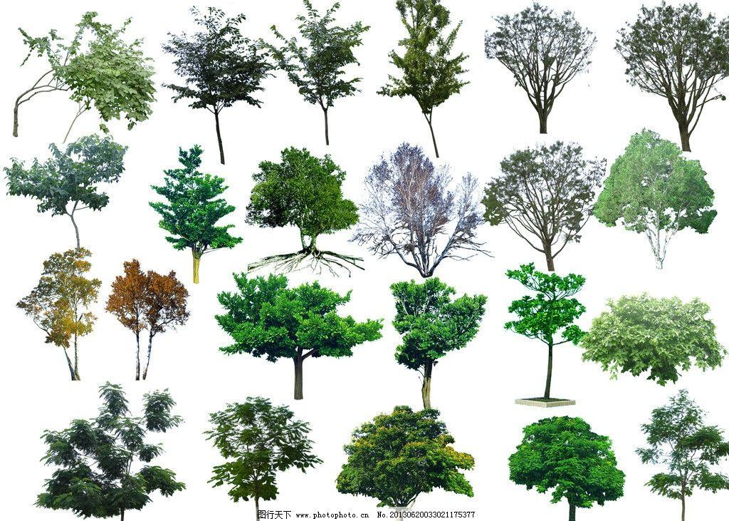 园林建筑效果图树木 平面 手绘 分层 源文件