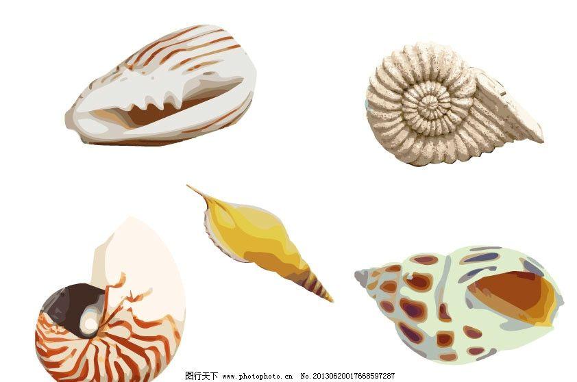 海螺简笔画步骤