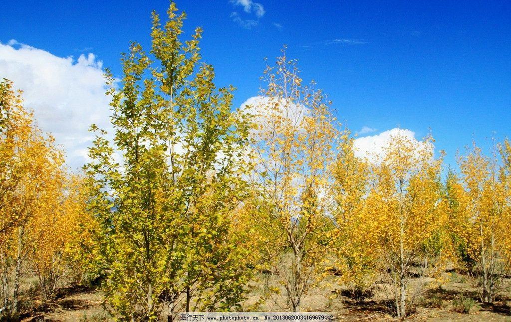 秋天树林图片