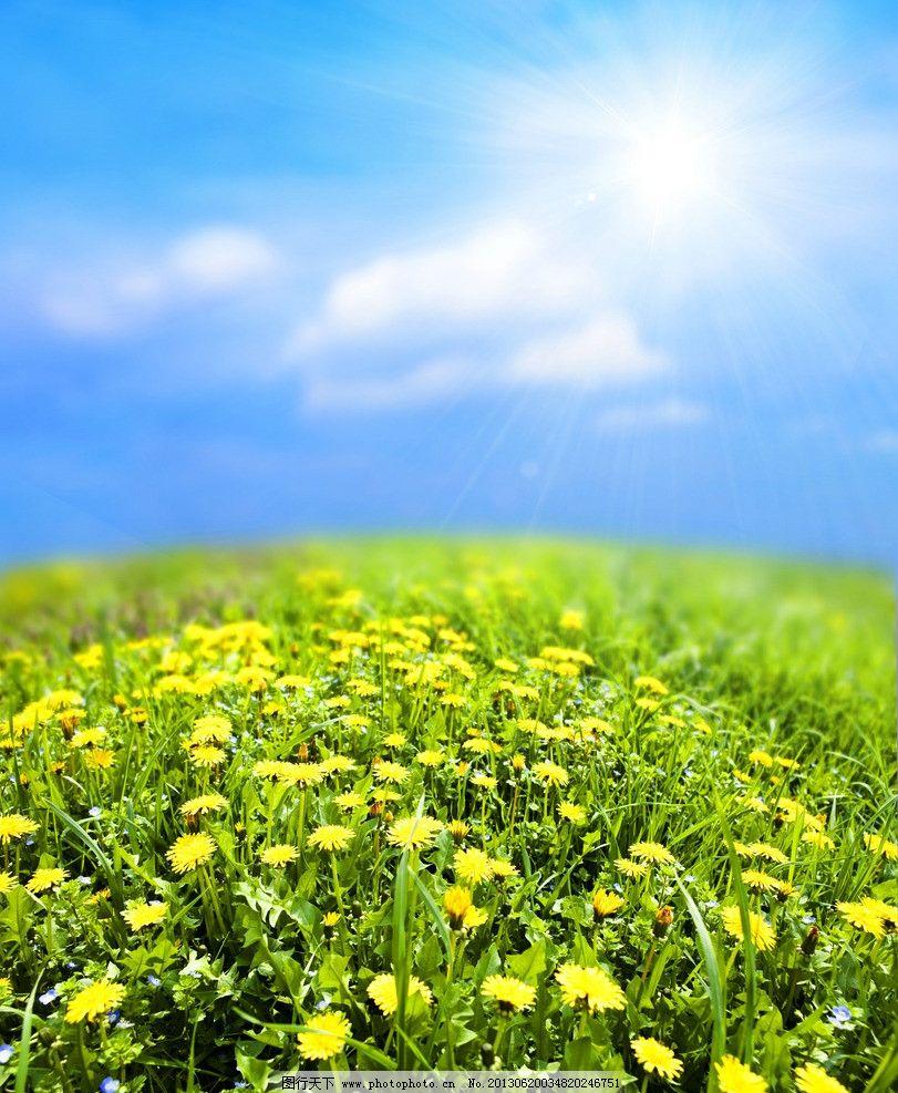 蓝天白云绿野鲜花 云彩 菊花 花海 洋甘菊 旷野 原野 风景 风光
