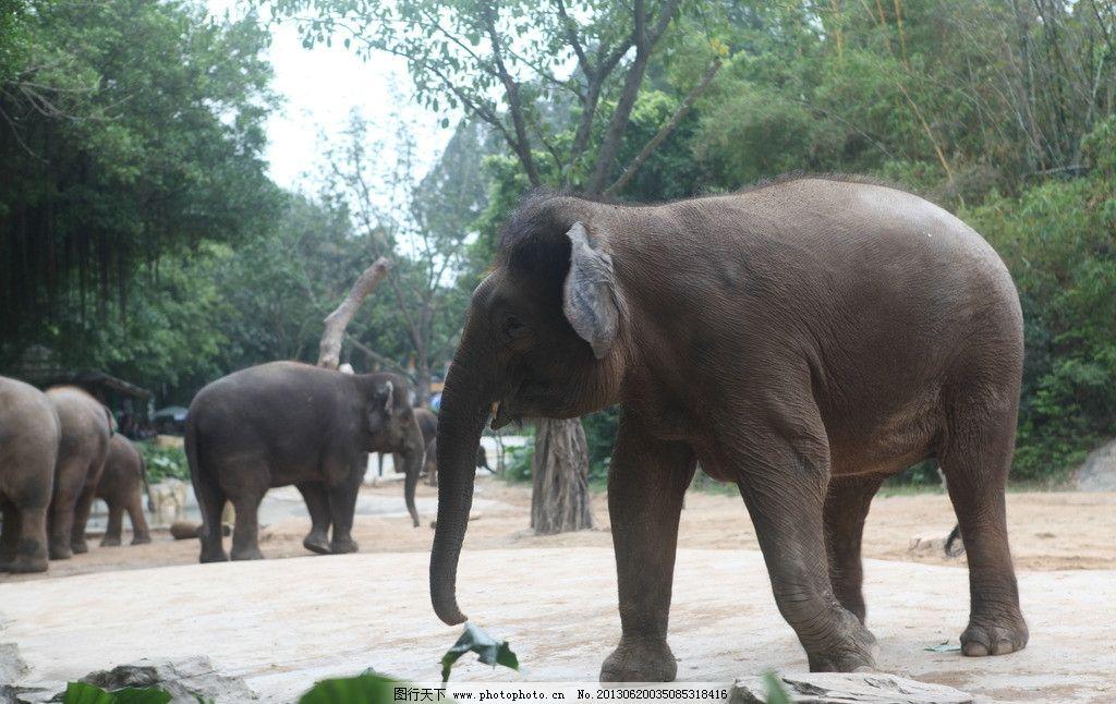 动物园 大象 动物 旅游 可爱 动物世界 野生动物 生物世界 摄影 72dpi