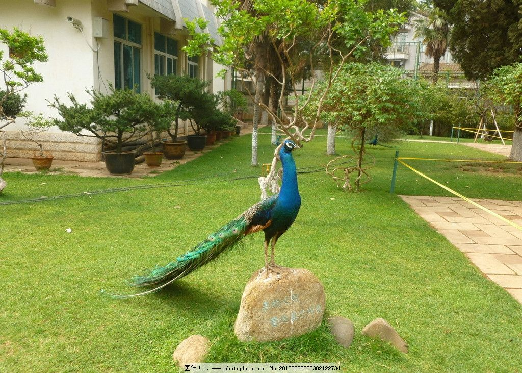 昆明动物园 昆明 动物园 孔雀 旅游 动物 鸟类 生物世界 摄影 180dpi