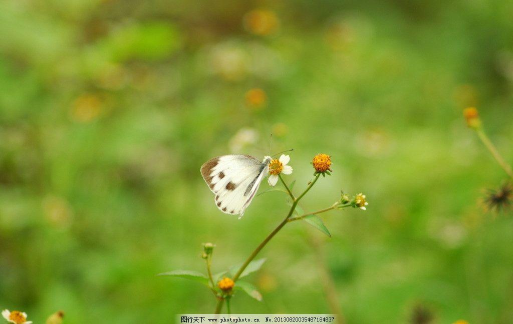 蝴蝶 花蝶 花丛中的蝴蝶 花 野花 昆虫 生物世界 摄影 300dpi jpg