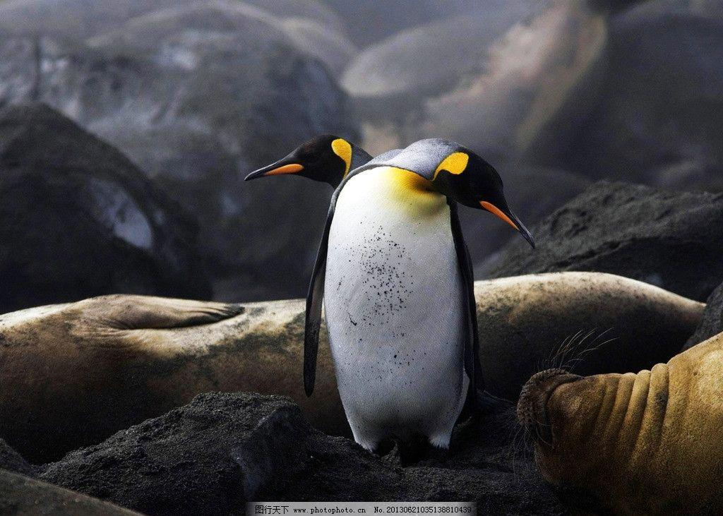 南北极 企鹅 污染 全球变暖 动物 海洋生物 生物世界 摄影 300dpi tif