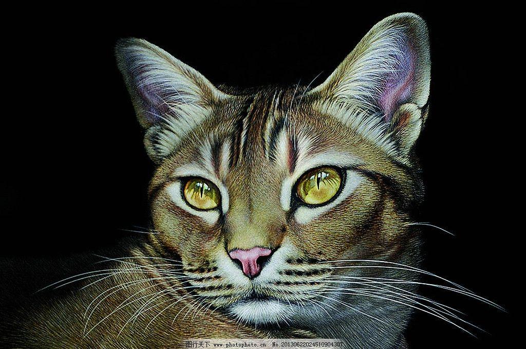 动物 猫 小猫 成年猫 手绘猫 工笔画猫 家禽家畜 生物世界 设计 1000