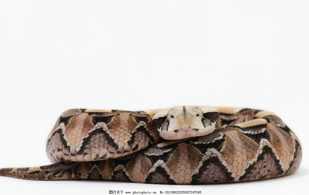 花蛇 动物 花纹 蛇头 蛇尾 野生动物 生物世界 摄影