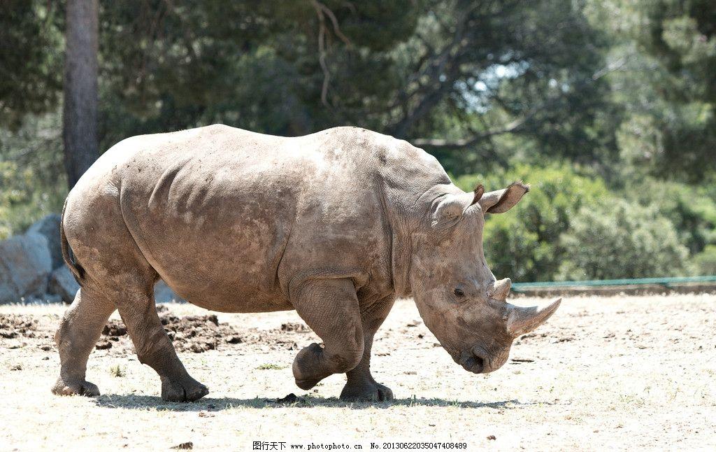 犀牛 动物 生物 动物园 哺乳动物 摄影 动物世界 野生动物 生物世界 1